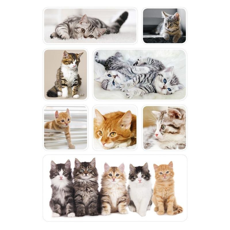 24x Poezen-katten-kittens dieren stickers