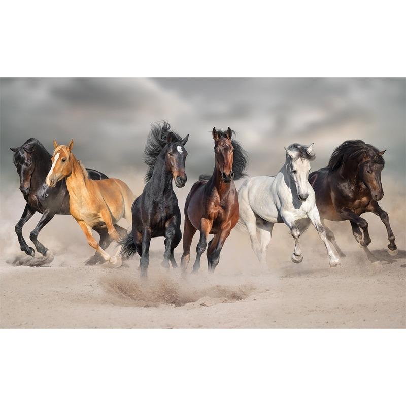 Poster paarden galopperend in het zand 84 x 52 cm